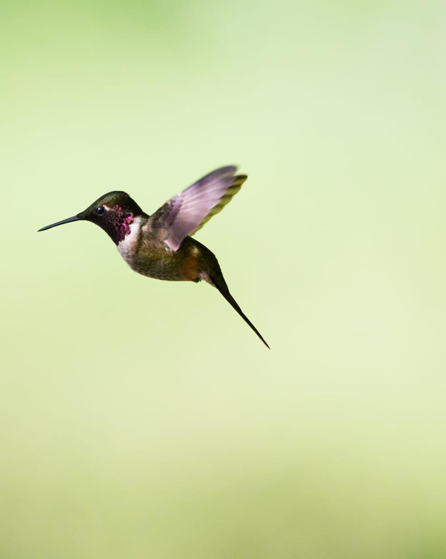 Costa Rica Adventure / Hummingbirds