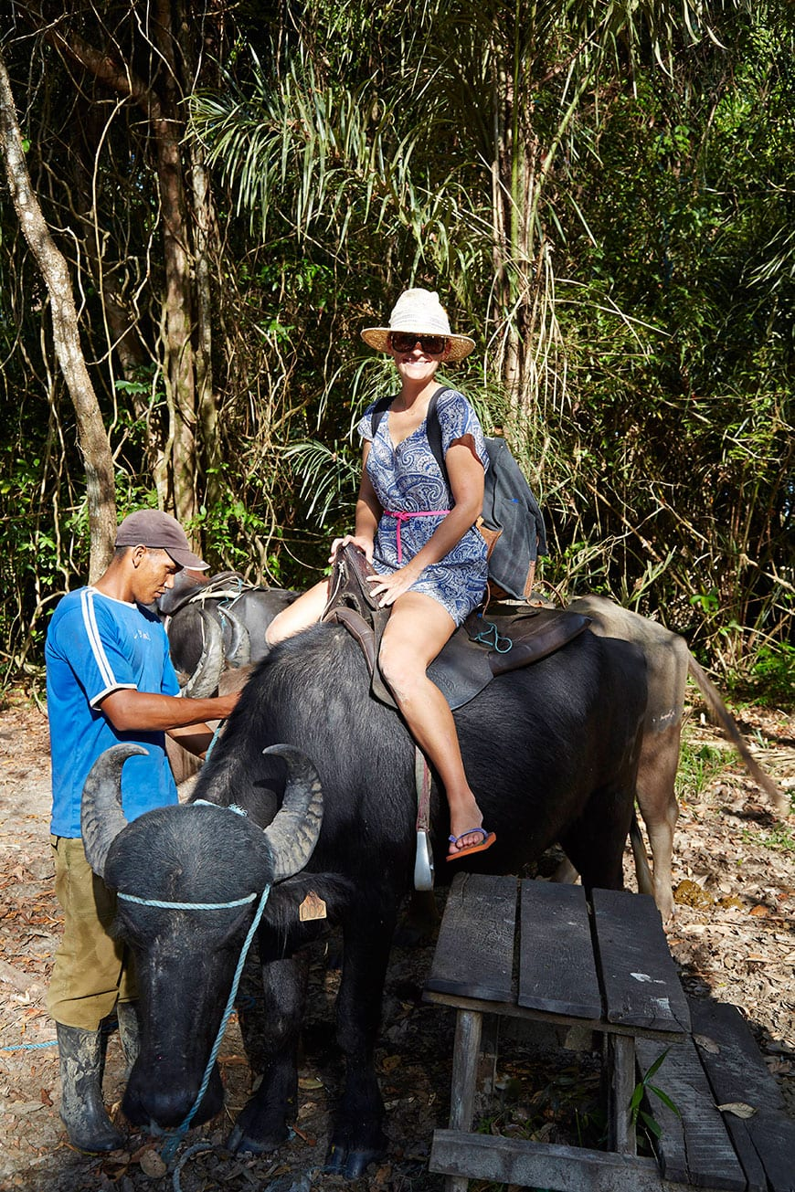 Water Buffalo Rides Belém, Brazil photo by Matt Armendariz
