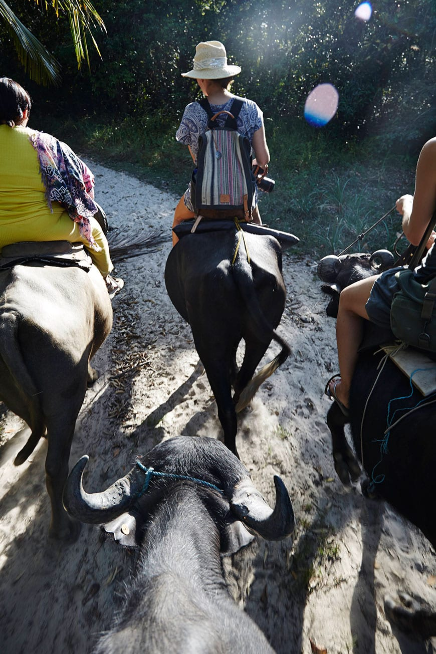 Buffalo Riding in Belém, Brazil photo by Matt Armendariz