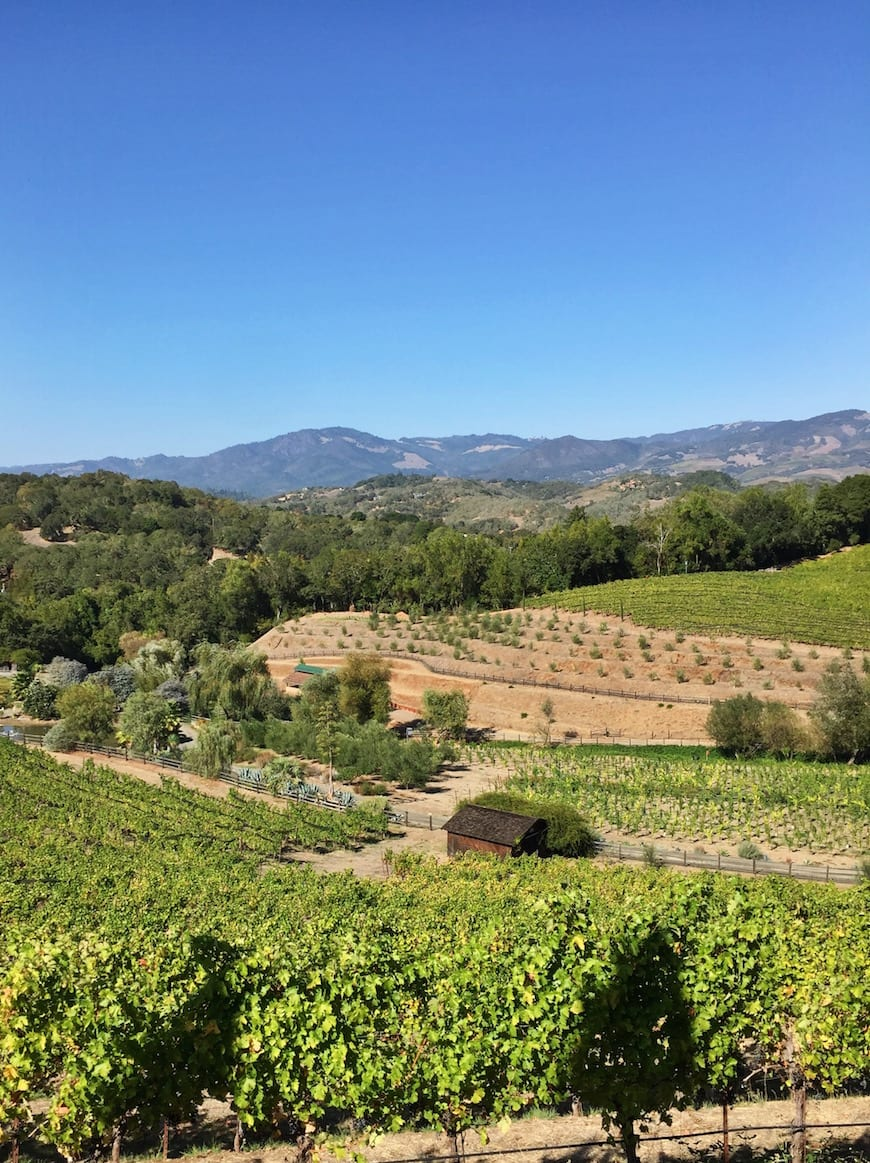 Benziger Winery / GG to Sonoma